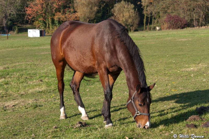des chevaux Dpp_-chevaux--0004-3c61218