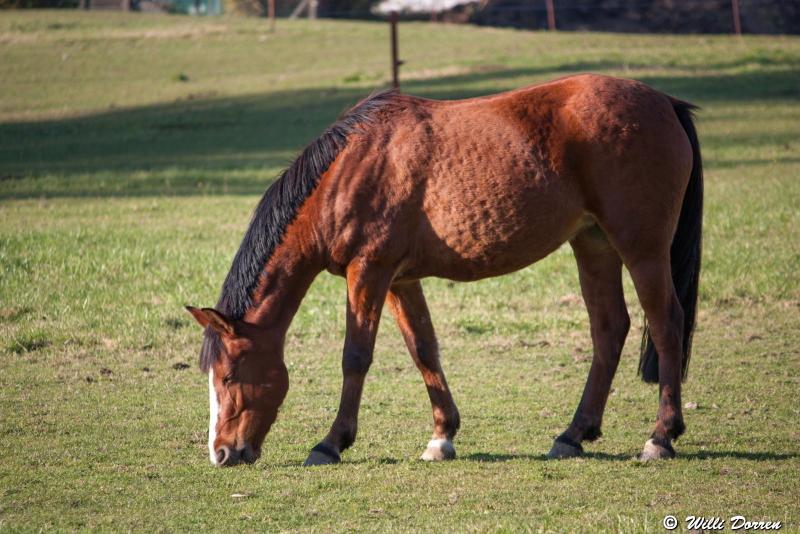 des chevaux Dpp_-chevaux--0001-3c6121a